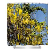 Yellow Wisteria Blooms Shower Curtain