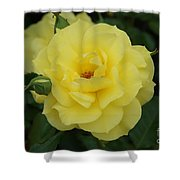 Yellow Wonder Rose...   # Shower Curtain