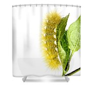 Yellow Wooly Bear Shower Curtain