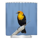 Yellowheaded Blackbird Shower Curtain