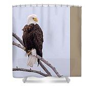 Yellowstone Bald Eagle Shower Curtain