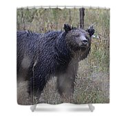 Yellowstone Grizzly Shower Curtain
