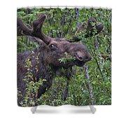 Yellowstone Munching Moose Shower Curtain
