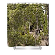 Yellowstone Wolves Shower Curtain