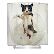 Yin Yang Kitten Shower Curtain