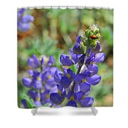 Yosemite Lupine And Ladybug Shower Curtain