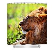 Young Adult Male Lion On Savanna. Safari In Serengeti Shower Curtain