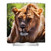 Young Adult Male Lion Portrait. Safari In Serengeti Shower Curtain