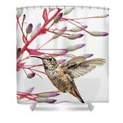 Young Allen's Hummingbird Shower Curtain