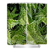 Young Aloe In Stereo Shower Curtain