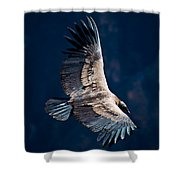 Young Andean Condor Shower Curtain