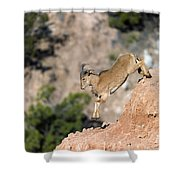 Young Auodad Sheep Descending The Canyon Shower Curtain