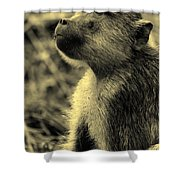 Young Baboon In Black And White Shower Curtain