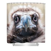 Young Baby Vulture Raptor Bird Shower Curtain