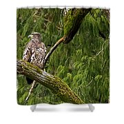 Young Baldy 2 Shower Curtain
