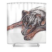 Young Black Dog Portrait Shower Curtain
