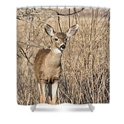 Young Black-tailed Deer Shower Curtain