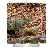 Young Blue Heron Shower Curtain