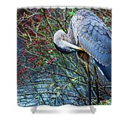 Young Blue Heron Preening Shower Curtain