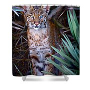 Young Bobcat Shower Curtain