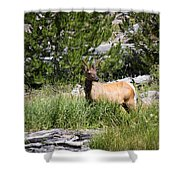 Young Bull Elk - Yellowstone National Park - Wyoming Shower Curtain