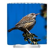 Young Cactus Wren Shower Curtain by Robert Bales