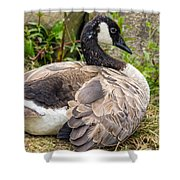 Young Canada Goose Shower Curtain