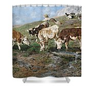Young Cattle In Tyrol Shower Curtain