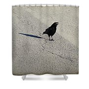 Young Cawing Crow Shower Curtain