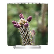 Young Cones Shower Curtain