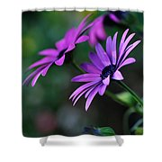 Young Daisies Shower Curtain