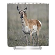 Young Doe Antelope Shower Curtain