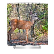 Young Doe Shower Curtain