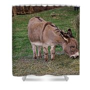 Young Donkey Eating Shower Curtain