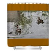 Young Ducks Shower Curtain