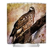 Young Eagle Pose II Shower Curtain