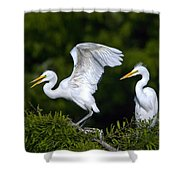 Young Egret Spreading His Wings Shower Curtain
