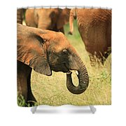 Young Elephant Shower Curtain