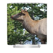 Young Elk Shower Curtain