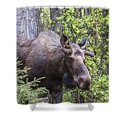 Young Fella Shower Curtain