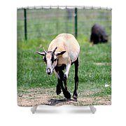 Young Goat Shower Curtain