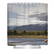 Young Grizzly Fishing At Hallo Bay Shower Curtain