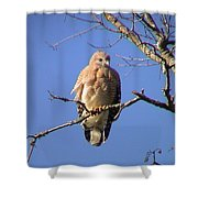 Young Hawk Shower Curtain