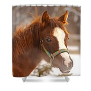Young Horse In Winter Day Shower Curtain