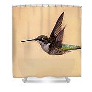 Young Hummingbird - Sailor Shower Curtain