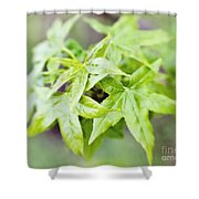 Young Leaves Shower Curtain