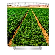 Young Lettuce Shower Curtain
