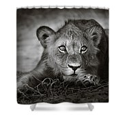 Young Lion Portrait Shower Curtain by Johan Swanepoel