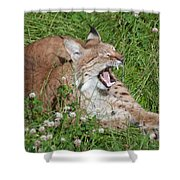 Young Lynx Yawning Shower Curtain