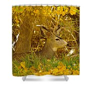 Young Male Buck Shower Curtain